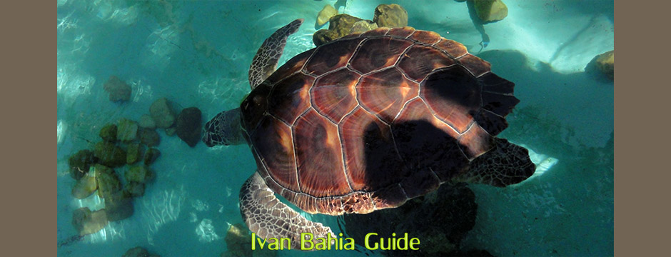 Projeto Tamar turtle protection program in Praia do Forte, while visiting the irresistable Coconut Coast, with it's aphrodisiac beaches, during a day-trip with Ivan Bahia Guide, official private (and English speaking) tour guide/driver