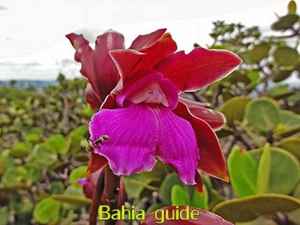 wilde orchidee, vegetatie, fotos Chapada Diamantina nationaal park, wandelingen & trekking met vlaamse reis-gids Ivan (die al 10 jaar in Bahia woont) voor uw rond-reis met begeleiding in het Nederlands in Brazilië / #ivanbahiabuide #ibg #bresil #brazil #brazilie #bresilessentiel #brazilessential #toursbylocals #gaytravelbrazil #fotosbahia #bahiatourism #salvadorbahiatravel #fotoschapadadiamantina #fernandobingretourguide #braziltravel #chapadadiamantinatrekking #chapadaadventure #bahiametisse #bahiaguide #lencois #diamantinamountains #diamondmountains #valedopati #patyvalley #valecapao #bahia #lençois #morropaiinacio #cirtur #chapadaadventuredaniel #chapadaroots #chapadasoul #diamantinatrip #chapadadiamantinaguide #chapadadiamantina #valedocapao #viapati #discoverbrazil #brasilienadventure #chapadadiamantinanationalpark #zentur #theculturetrip